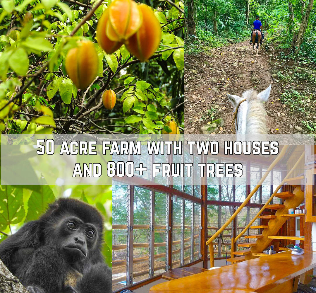 50 Acre Farm With Two Houses and 800+ Fruit Trees