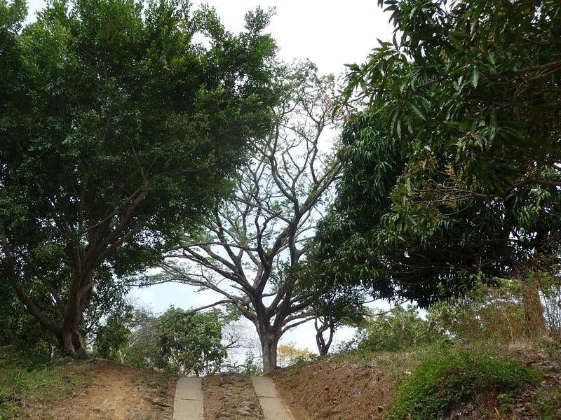 50-Acre-Farm-With-Two-Houses-and-800-Fruit-Trees-23