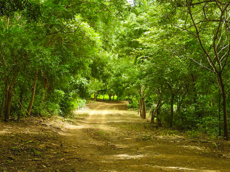 50-Acre-Farm-With-Two-Houses-and-800-Fruit-Trees-8